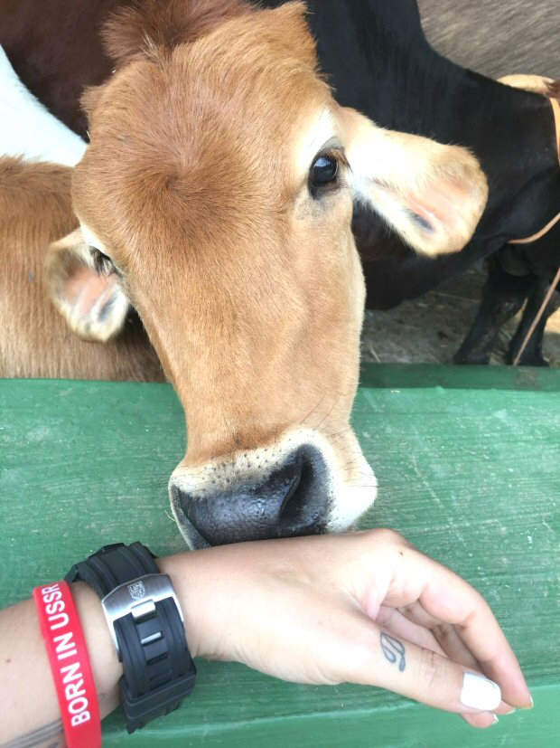 Pooja Bhatt turns her farmhouse into a 22,000 square feet animal shelter
